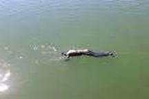 جوان 30 ساله در سد بابانظر غرق شد
