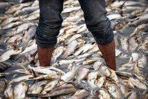 هشت تن صید غیرمجاز توسط مرزبانان خوزستان  کشف شد