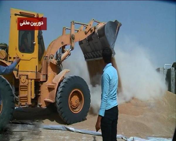 پرونده مخلوط کردن خاک با گندم درفارس  پنج نفر دستگیر شدند