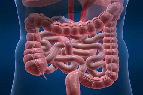 باکتریهای مفید روده را نابود نکنید
