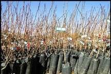 توزیع 8هزار اصله نهال به مناسبت هفته منابع طبیعی در سلماس