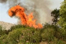 2 مورد آتش سوزی در منابع طبیعی خراسان شمالی رخ داد