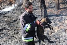 آتش سوزی در پارک ملت سنندج موجب سوختگی شدید یک شغال شد