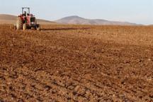 185 هزار هکتار از اراضی قزوین به کشت پاییزه اختصاص یافت