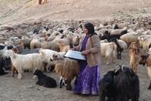 2.2 میلیارد ریال وام به عشایر یزد پرداخت شد