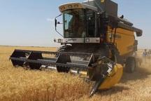خرید تضمینی گندم از کشاورزان کهگیلویه و بویراحمد آغاز شد
