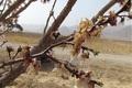 مدیریت بحران خراسان شمالی نسبت به کاهش دما هشدار داد