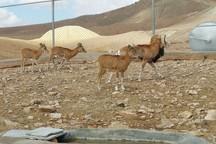 بازدید مسافران نوروزی از مناطق حفاظت شده خراسان جنوبی آزاد است