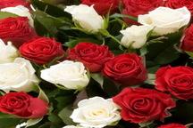 برداشت 4 میلیون و800 هزار گل شاخه بریده در چهارمحال و بختیاری