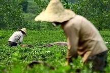 اگر کشاورزی صاحب داشت؛ امروز اقتصاد مازندران خودکفا بود در همه عرصه ها احساسی عمل می کنیم و توقع نتایج منطقی داریم