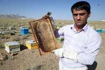 تولید سالانه 12 تن عسل طبیعی در مهریز