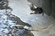 طرح مبارزه و ریشه کنی جانوران مضر درمنطقه هشت تهران