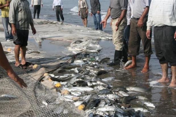 آب رفتگی قد و قامت ماهیان دریای خزر با آلودگی