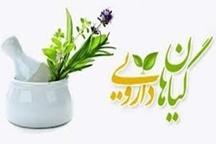 اجرای طرح کشت گیاهان دارویی در مراتع چهار شهرستان اصفهان