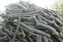 کشف 12 تن چوب درخت بلوط قاچاق در خرم آباد