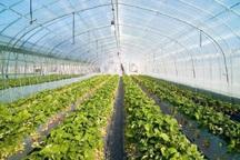 65 هزار متر مربع گلخانه در شهرستان ری احداث شد