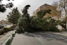خسارت ۱۵۰ میلیارد ریالی طوفان به بخش کشاورزی آذربایجانغربی