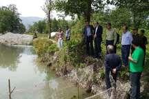 رهاسازی 1.5میلیون بچه ماهی سفید در رودخانه سردآبرود چالوس