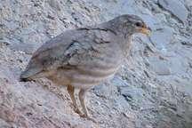10 قطعه پرنده تیهو قاچاق در ایرانشهر کشف شد