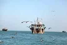 افزایش 31 درصدی صید میگو در بوشهر