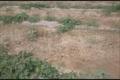 هجوم ملخها به مزارع شبانکاره
