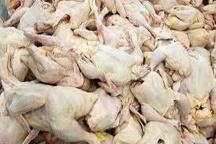 تولید سالانه10هزار تن گوشت سفید در میاندورود