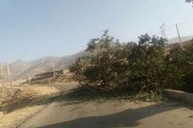 سقوط درخت راه 18روستای بخش چلو اندیکا را بست
