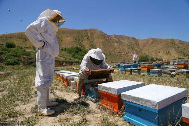 سالانه بیش از پنج هزار تن عسل در استان کرمانشاه تولید میشود