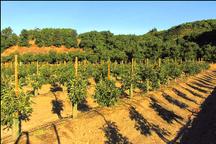 جلوگیری از فرسایش خاک مهمترین برنامه توسعه باغات در اراضی شیبدار