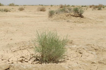 بارشهایی که حریف خشکسالی در استان سمنان نیست
