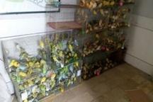 کشف ۴۵۰ قطعه پرنده قاچاق در لرستان