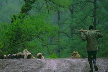 نمایش هشت فیلم درباره جنگل های هیرکانی درجشنواره وارش