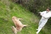 دلیل مرگ مرال های پارک جنگلی سیاه داران تالش اعلام شد