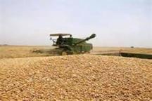 برداشت افزون بر 43 هزار تن گندم، جو و کلزا از اراضی زراعی گنبدکاووس
