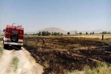 2 هزار متر مربع مزارع کشاورزی مبارکه در آتش سوخت