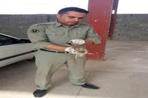 کشف و ضبط تجهیزات صید پرندگان شکاری در اراضی حومه شهر قلعه تل باغملک
