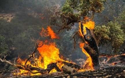 200 هکتار از بلوط های بهبهان طعمه آتش شدند