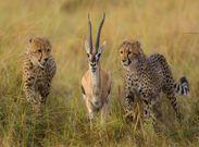 عواملی که حیات وحش را تهدید می کنند