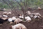 45 راس گاو و گوسفند طعمه آتش شد