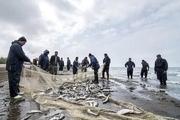 افزایش 200 درصدی صید ماهیان استخوانی از دریای مازندران