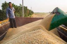 12مرکز محصولات کشاورزان بیله سوار را خریداری می کنند