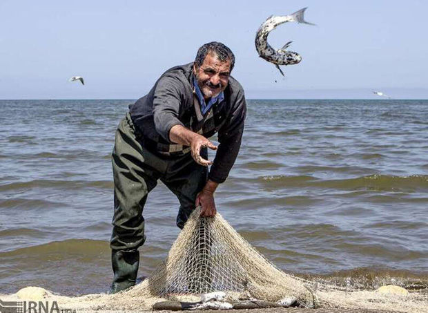 آغاز فصل صید ماهیان استخوانی در سواحل خزری گلستان