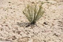بارندگی 82 درصد در کرمان کاهش داشته است