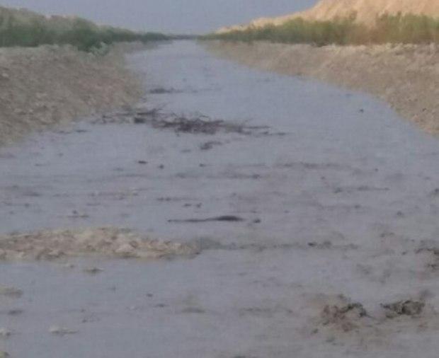 بارش های اخیر تالاب آلاگل را از خشکیدگی نجات داد