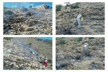 آتش غفلت گردشگران بر جان بیش از 100 هکتار از جنگلها و مراتع کرمان