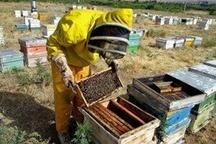 اجرای طرح ارزیابی عملکرد کلنیهای زنبورعسل در اردبیل