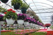 تولید کنندگان گل های زینتی در یزد وام کم بهره دریافت می کنند