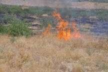 آتش سوزی محدود در پارک ملی گلستان