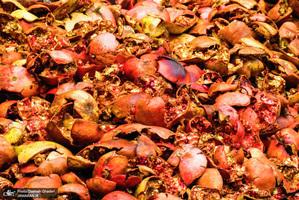 پاییز زیبا و رویایی شهر نودشه پاوه