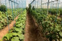 ۲۳۸۶طرح بخش کشاورزی سیستان وبلوچستان تسهیلات دریافت کردند
